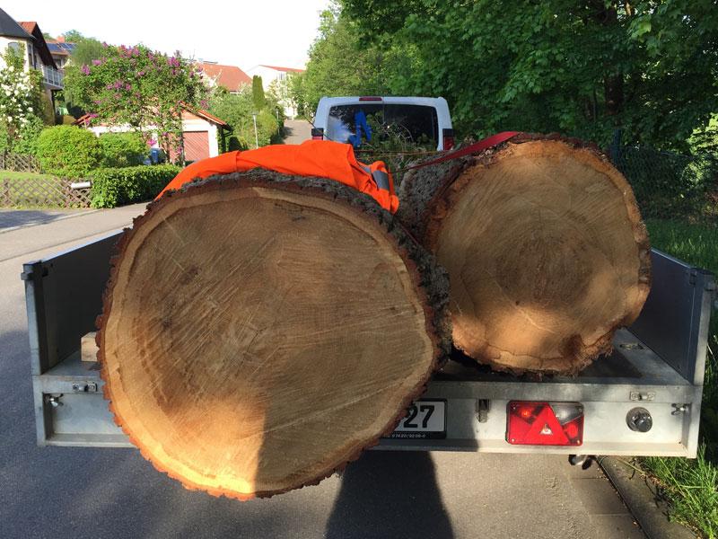 Unbearbeitete Baumstämme auf dem Weg in die Schreinerei